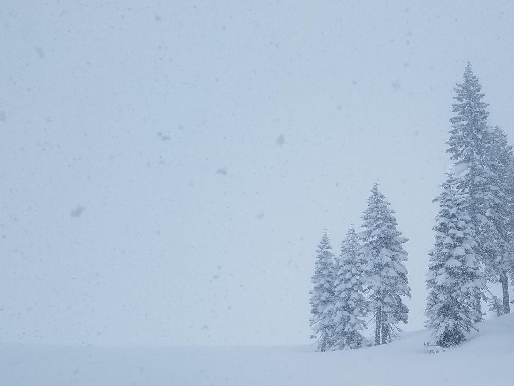 Whiteout Conditions above Treeline